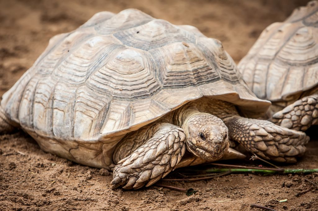 Đề thi IELTS Reading Flying Tortoises Download đề bài đọc & đáp án