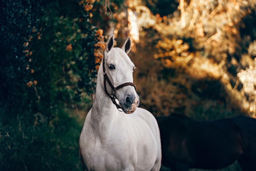 Đề thi IELTS Reading The White Horse Of Uffington Download đề bài đọc & đáp án