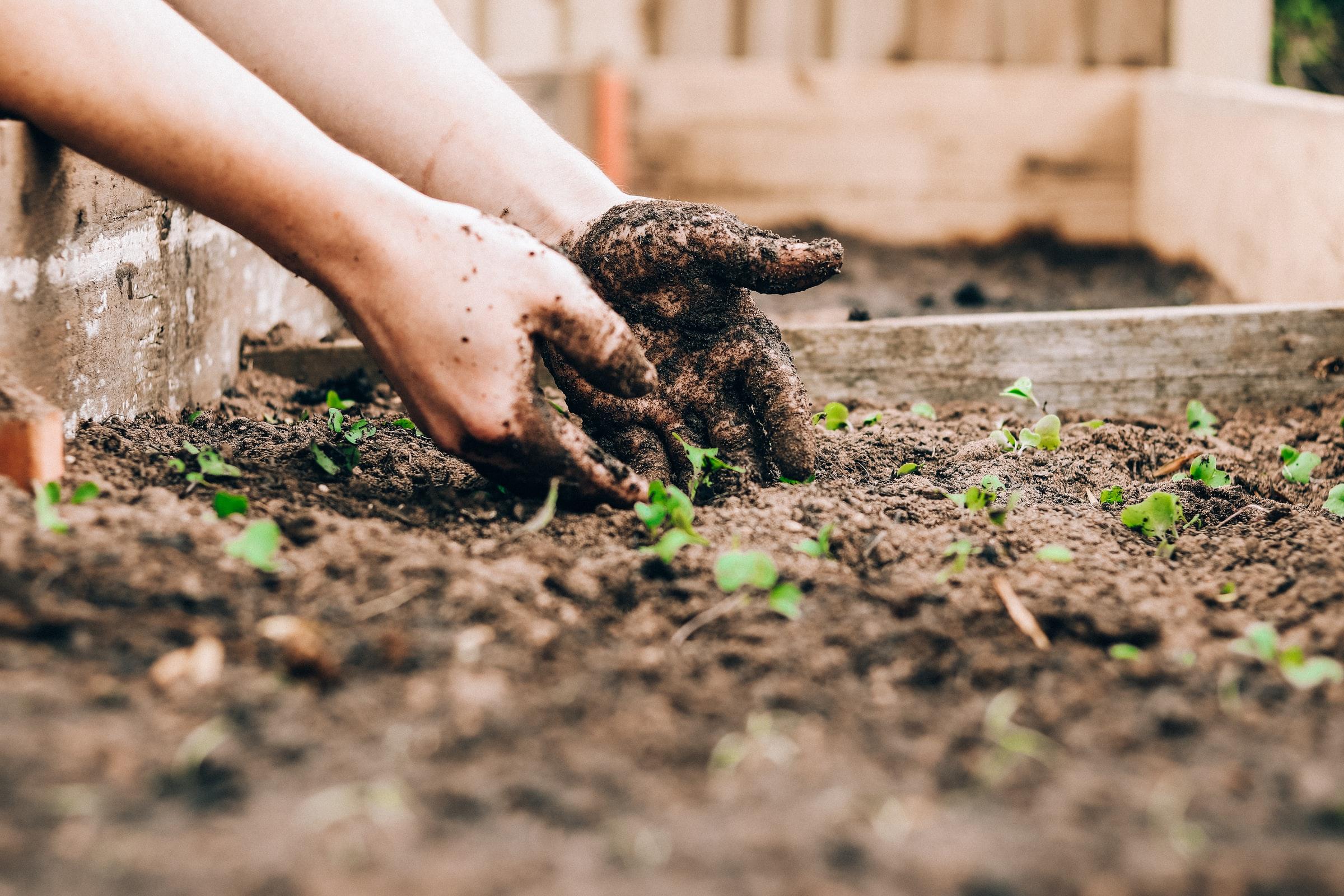 Đề thi IELTS Reading Saving The Soil Download đề bài đọc & đáp án
