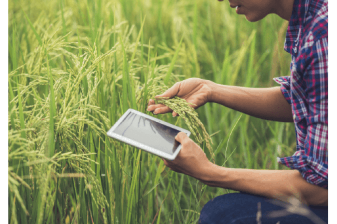 Đề thi IELTS Listening Practice Fiddy Working Heritage Farm - Download PDF Câu hỏi, Transcript và Đáp án